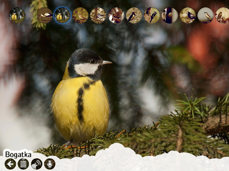 atlas_ptakow_dla_dzieci_2